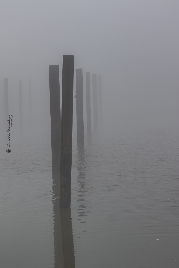 nebel-1